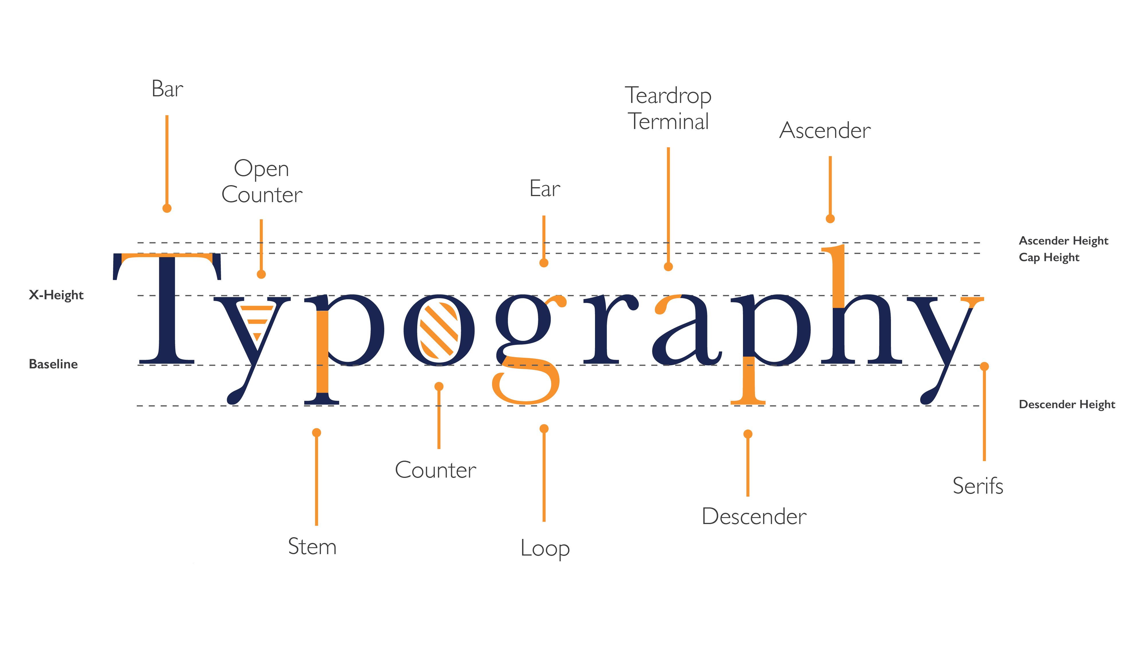 final image type anatomy