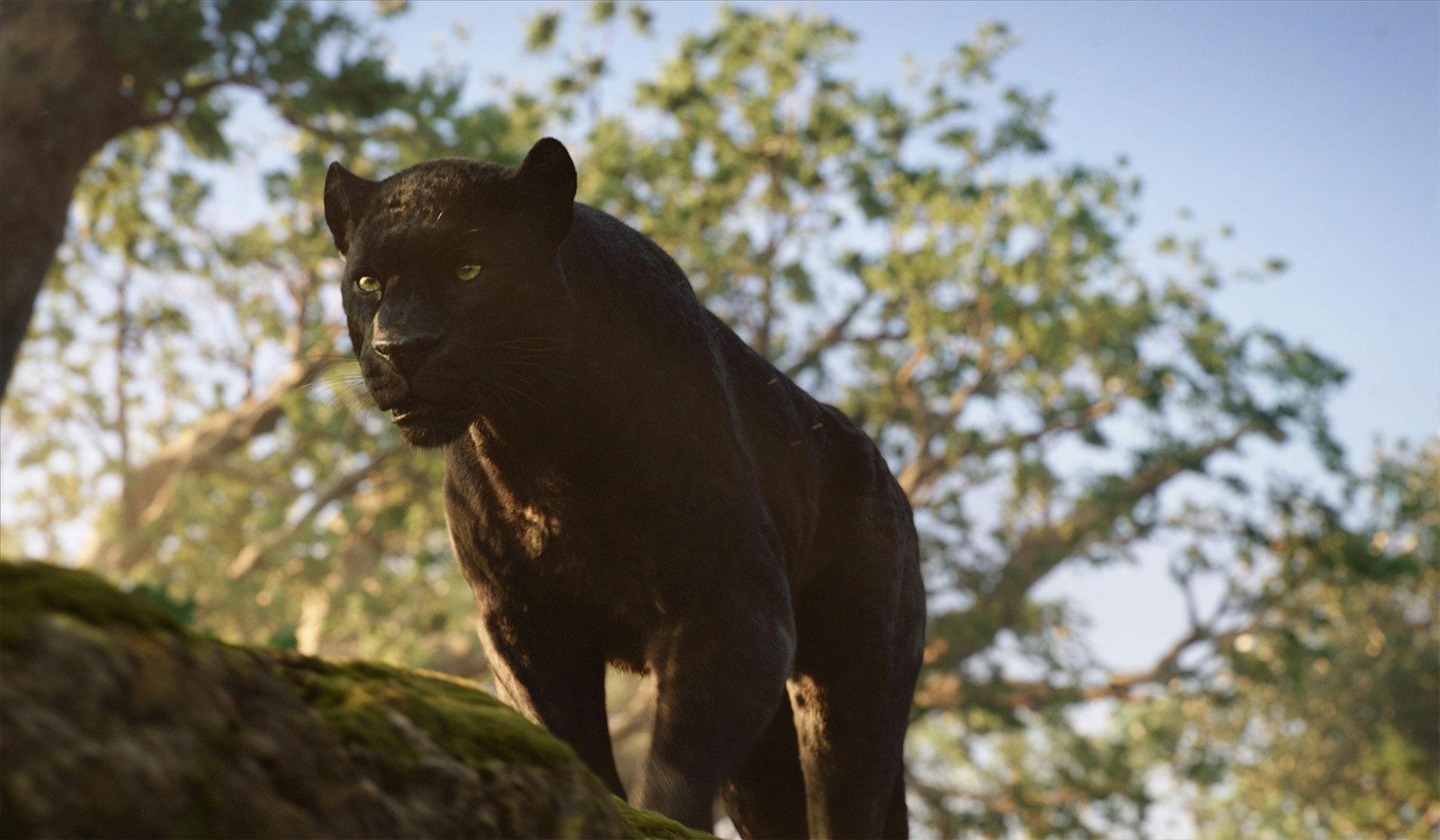 Jungle Book vs Mowgli bagheera_junglebook_