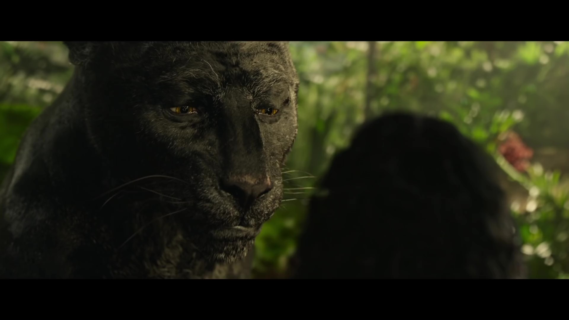 Jungle Book vs Mowgli bagheera_mowgli_