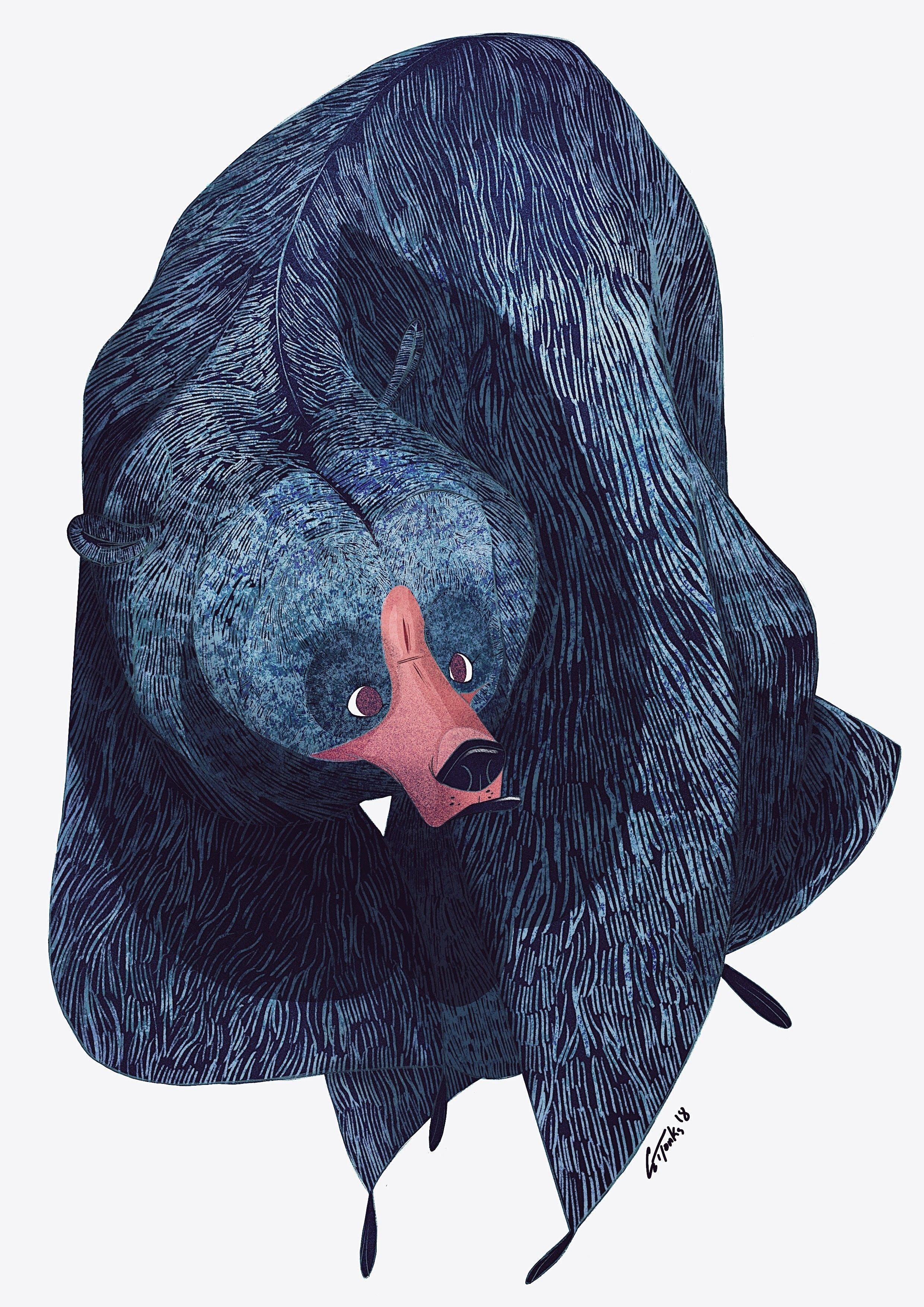 bear illustration george tonks