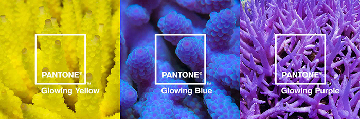 glowing-glowing-gone-01_glowing-palette